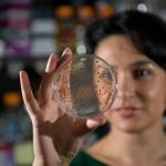 Каде ќе ги најдете најопасните бактерии?