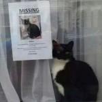 ФОТО: Загубена мачка?