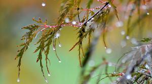 Облачно со врнежи од дожд и снег