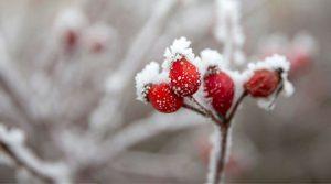 Најстудено во Лазарополе и Маврово