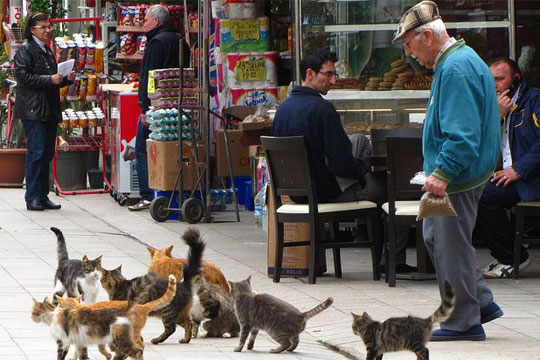 Прифаќање на скитниците во Истанбул  дебелите мачки се нешто добро