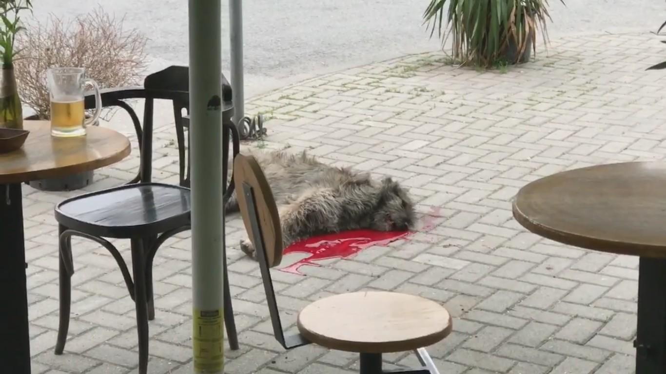 Со секира  ладнокрвно убиено куче среде Скопје