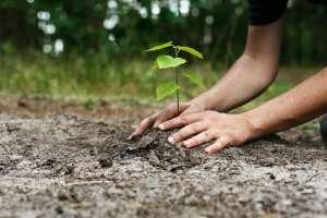 За  Ден на дрвото  биле потрошени 17 8 милиони евра  а преживеале само 21 отсто од вкупно засадените садници