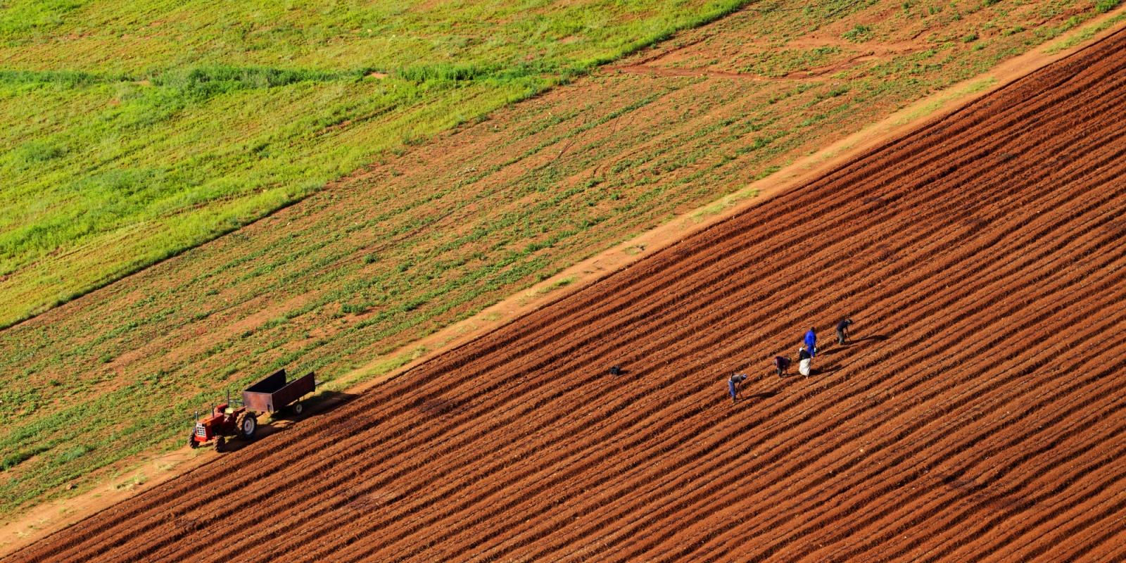Во Долнени земјоделците пријавуваат штети од невремето во понеделникот