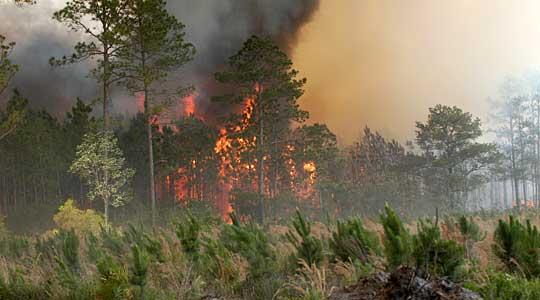 ЦУК  Се уште активни неколку пожари во Македонија